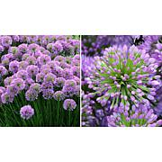 Leaf & Petal Designs 3-piece Millenium Allium