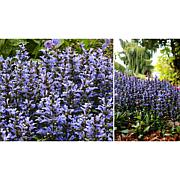 Leaf & Petal Designs 5-piece Blueberry Muffin Ajuga