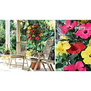 Leaf & Petal Designs Tricolor Braided Tropical Hibiscus Tree