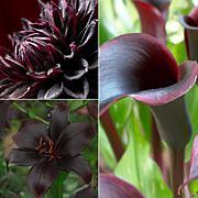 VanZyverden Color Your Garden Black Collection 19-piece Bulb Set