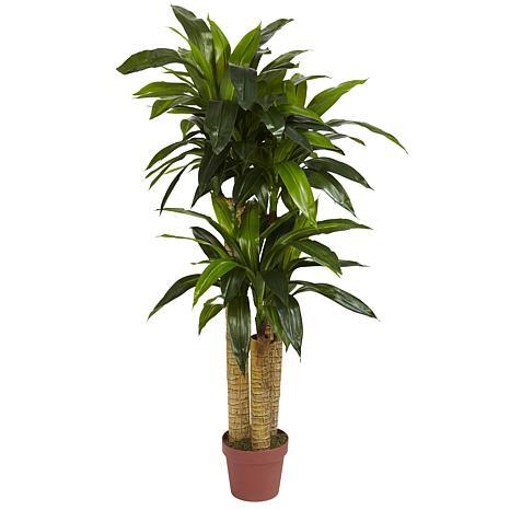 4 Ft. Corn Stalk Dracaena Silk Plant Real Touch