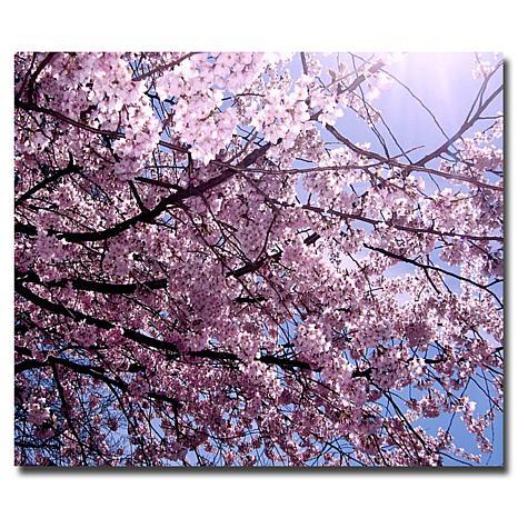 """Ariane Moshayedi """"Cherry Blossom Flare"""" Art - 18"""" x 24"""""""