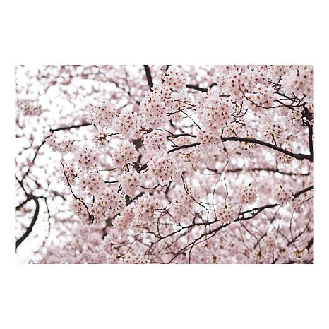 "Ariane Moshayedi ""Cherry Blossoms"" Canvas Art-16"" x 24"""