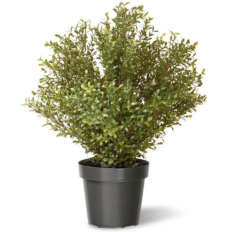"Artificial 30"" Argentea Plant in Green Growers Pot"