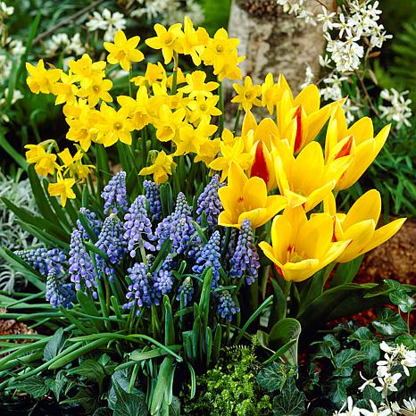 Cottage Garden Collection Set of 75 Bulbs