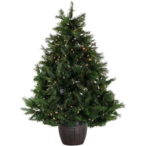 Fraser Hill Farm 5' Cedar Teardrop Potted Tree with Clear LED Lights