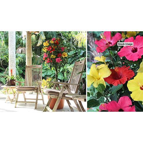 Leaf & Petal Designs Tricolor Braided Tropical Hibiscus Tree