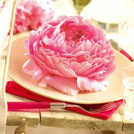 Peonies Dinnerplate Pink Set of 5 Roots