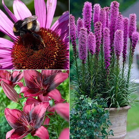 VanZyverden Color Your Garden Purple Collection 37-piece Bulb Set
