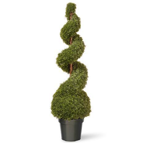Winter Lane 4' Artificial Topiary Cedar Spiral with Ball