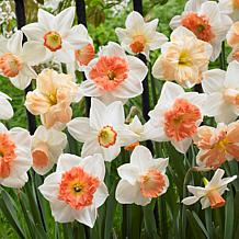 Daffodils Pink Mixture Set of 15 Bulbs