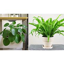 Leaf & Petal Designs 2-piece Houseplant Duo