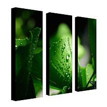 Philippe Sainte-Laudy 'Green Pearl' Multi-Panel Art Collection