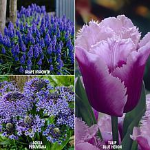 VanZyverden Color Your Garden Blue Collection 29-piece Bulb Set