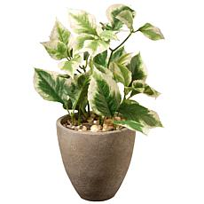 "12"" Artificial Pothos Plant"