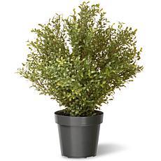 2-1/2' Artificial Topiary Argentea Plant
