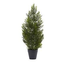 2 Ft. Mini Cedar Pine Tree