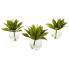 Agave Succulent with Vase Set of 3
