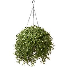 "Artificial 18"" Argentea Hanging Basket"