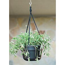 """Bloem Dura Cotta 12"""" Hanging Basket"""