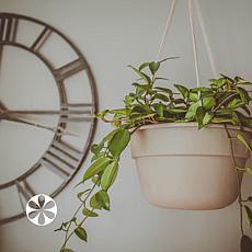 Dura Cotta Hanging Basket 12 in