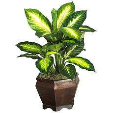 Golden Dieffenbachia with Wood Vase