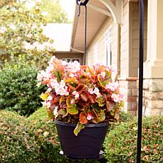Hangin' Pretty Hanging Planter Basket Hook 2-pack