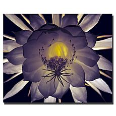 "Kurt Shaffer ""Floral Contrast"" Canvas Art"