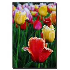 "Kurt Shaffer 'In Among the Tulips II' Print - 30"" x 47"""