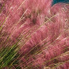 Leaf & Petal Designs 3-piece Pink Muhly Grass