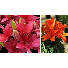 Leaf & Petal Designs Tricolor Lily Collection