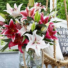Lilies Oriental Fragrant Cut Flower Blend Set of 12 Bulbs