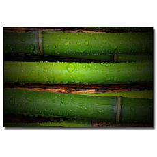 "Philippe Sainte-Laudy ""Bamboo Drops"" Print"