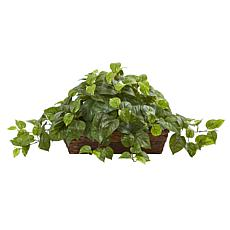 Pothos with Ledge Basket