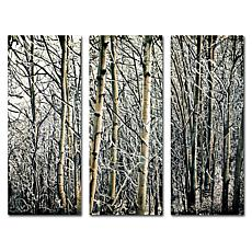 Roderick Stevens 'Aspen Winter' Art Collection