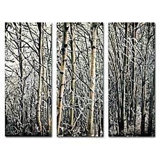 Roderick Stevens 'Aspen Winter' Art Collection