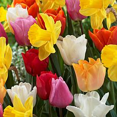 Tulips & Narcissus Pot Luck Mixture Set of 15 Bulbs