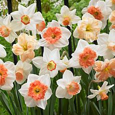 VanZyverden Daffodils Pink Mixture 100-piece Bulb Set