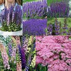VanZyverden Hummingbird Butterfly Perennial Sun Garden Set of 11 Roots