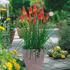 VanZyverden Red Hot Poker Kit w/ Planter, Planting Medium and Root