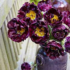 VanZyverden Tulips Wow 8-piece Bulbs