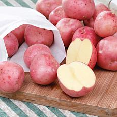 VanZyverden USDA Organic Cherry Red Potatoes W8893 12-Pack