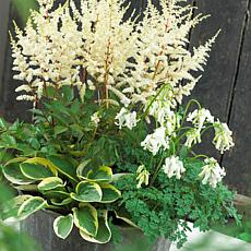 White Shade Perennial Patio Container Collection Set of 3 Roots