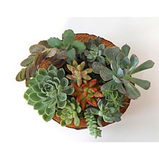 Wood and Wine Succulents Elizabeth Hand Carved Bowl Centerpiece