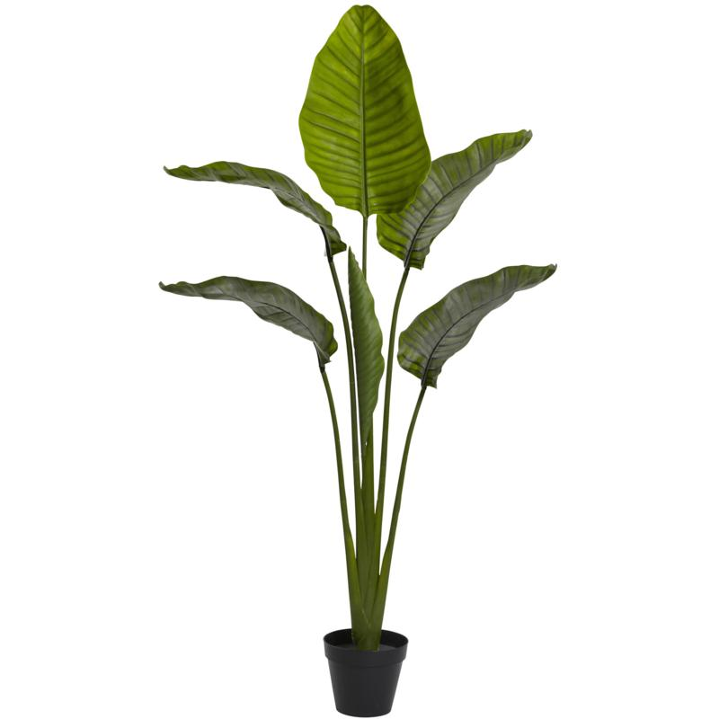 64 in. Travellers Palm Tree