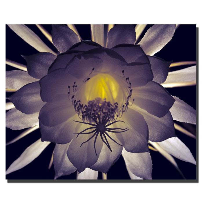 """Kurt Shaffer """"Floral Contrast"""" Canvas Art"""