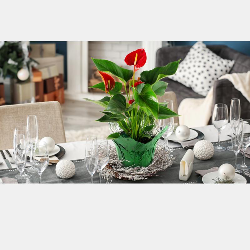 Leaf & Petal Designs 1-piece Holiday Anthurium